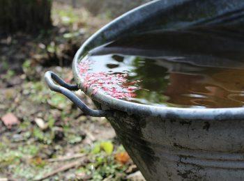 Yard Rainwater Harvesting
